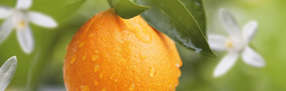 Orangen_Genusswelt_1_04